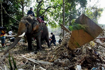 An elephant helps clean debris in Thailand