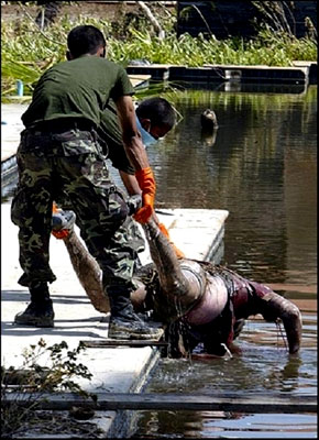 Two soldiers pull a dead man from the water